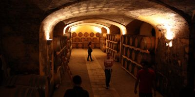Visit to a Masseria and to a winery with tastings of cheeses, wine and olive oil